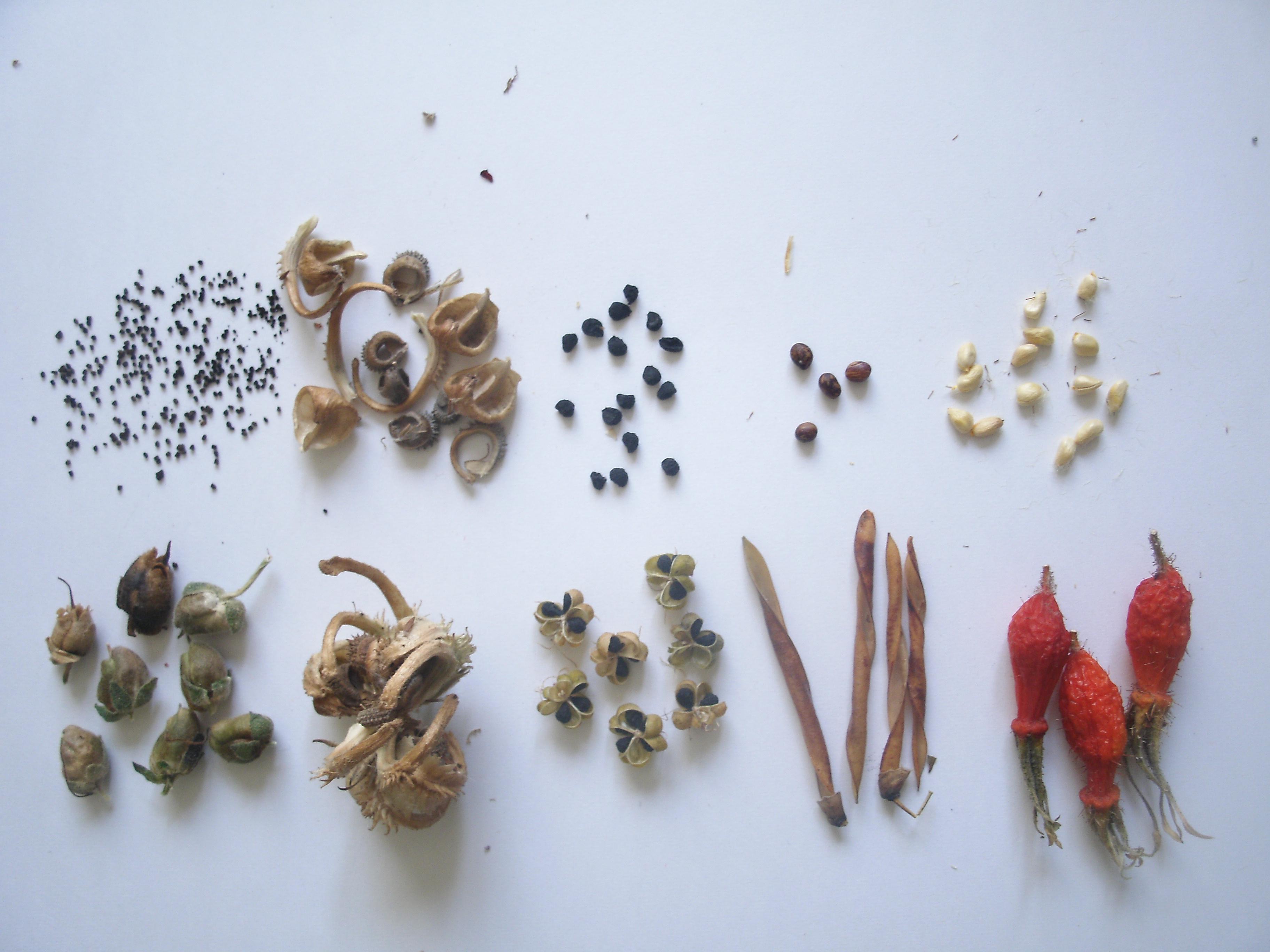 Мелкие черные семена цветов фото
